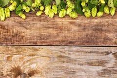 秋天在老木头的蛇麻草分支 免版税图库摄影