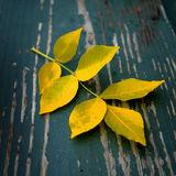 秋天在老被佩带的木头的秋叶 库存图片