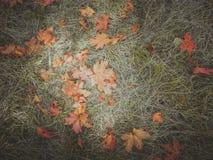 秋天在草的桔子叶子 图库摄影