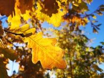 秋天在莫斯科 库存照片