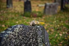 秋天在菲利普斯塔德瑞典公墓  免版税图库摄影