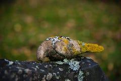秋天在菲利普斯塔德瑞典公墓  免版税库存照片