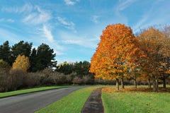 秋天在菲尼斯公园 库存照片