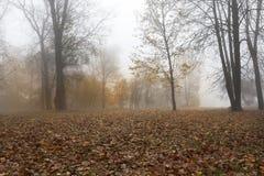 秋天在落叶林里 库存照片