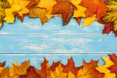 秋天在蓝色木背景的槭树叶子 免版税库存图片