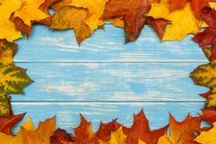 秋天在蓝色木背景的槭树叶子 图库摄影