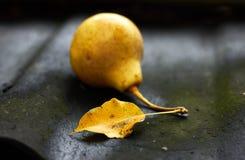秋天在被弄脏的梨果子前面的下落的黄色梨叶子在有青苔的在一下雨天,baccklit,克洛黑土气脏的屋顶 免版税库存照片