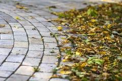秋天在路面石头的黄色叶子 库存图片