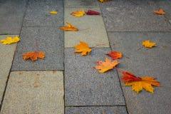 秋天在边路的槭树叶子 免版税库存照片