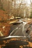 秋天在这森林 库存照片