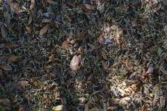 秋天在里约热内卢 免版税库存图片