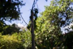 秋天在里约热内卢 库存照片