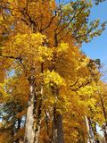 秋天在锡古尔达,拉脱维亚 免版税库存照片