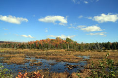 秋天在阿迪朗达克公园 库存图片