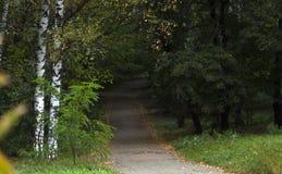 秋天在雾的公园胡同与树和橙色下落的叶子 免版税库存图片