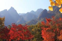 秋天在韩国 库存图片