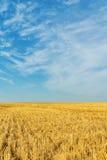 秋天在麦子收获以后的亩茬地 免版税图库摄影