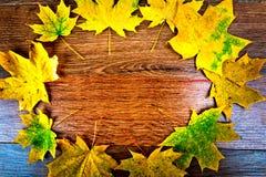 秋天在黑暗的木背景的槭树叶子 与拷贝空间的顶视图 免版税库存照片