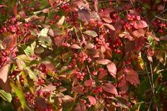 秋天在晴天,公园,树,分支 库存照片