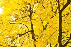秋天在贝尔法斯特植物园里 库存图片
