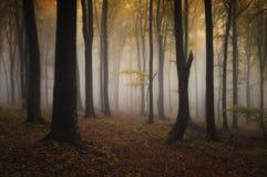 秋天在幻想森林里 免版税库存照片