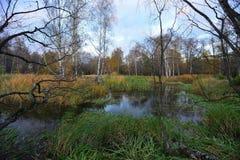 秋天在10月 图库摄影