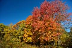 秋天在10月 免版税库存照片