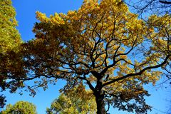 秋天在10月 库存照片