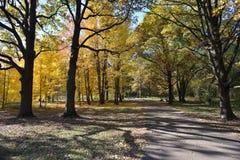 秋天在10月 库存图片