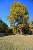 秋天在10月 免版税库存图片