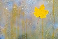 秋天在玻璃的枫叶用水滴下 库存图片