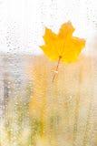 秋天在玻璃的枫叶用水滴下 免版税库存照片