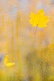 秋天在玻璃的枫叶用水滴下 图库摄影