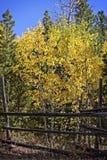 秋天在洛矶山国家公园 库存图片