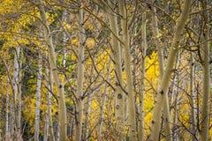 秋天在洛矶山国家公园 图库摄影