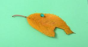 秋天在绿色的核桃叶子 免版税库存图片