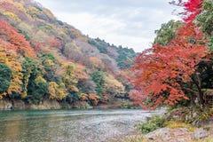 秋天在Arashiyama,京都,日本上色季节 免版税库存图片