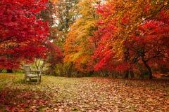 秋天在Bodnant庭院里 免版税图库摄影