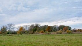 秋天在Bourgoyen自然保护,跟特,比利时的沼泽地风景 免版税库存照片