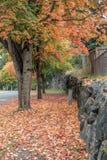 秋天在Burien 7 免版税库存照片