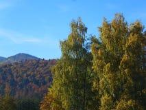 秋天在Carpathians 免版税库存照片