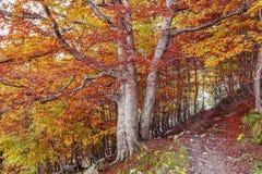 秋天在mountaim森林里 图库摄影