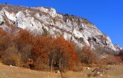 秋天在Rasnoave峡谷,布拉索夫县 库存图片