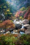 秋天在Shosenkyo峡谷 免版税库存照片