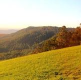 秋天在Tamborine山国家公园,昆士兰,澳大利亚 免版税库存图片
