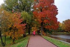 秋天在Terletsky公园在莫斯科 库存图片