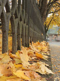 秋天在Uzhgorod 库存照片