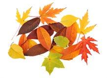 秋天地毯叶子 免版税库存照片