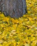 秋天地毯 库存照片