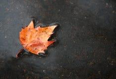 秋天地面叶子雨 图库摄影